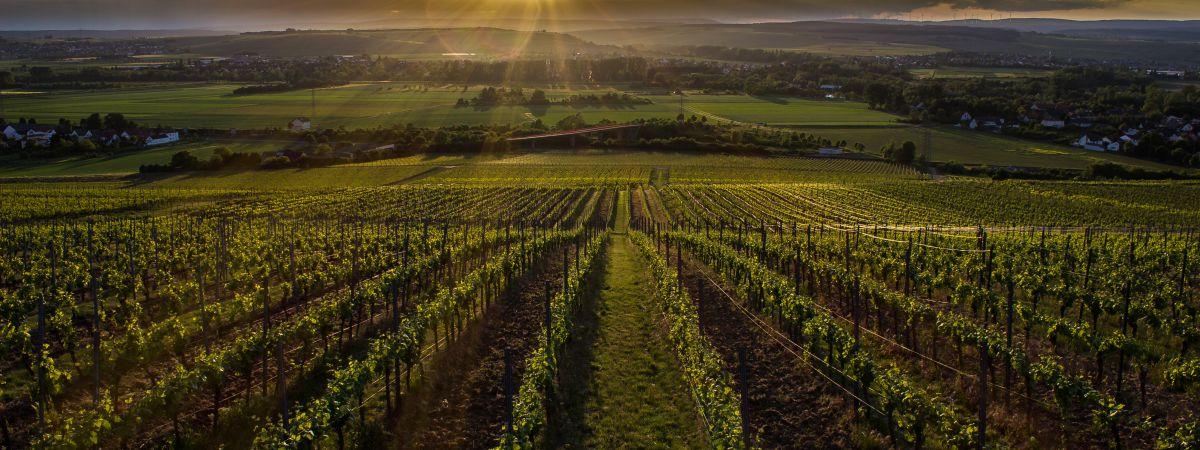 Wijngoed Johanninger