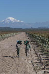 In de Ugarteche Valley maakt Gabriel handig gebruik van het smeltwater van het Andes Gebergte