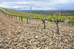 Uitzicht over de wijngaarden!