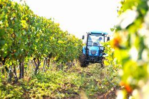 Bewerken van de wijnvelden!!