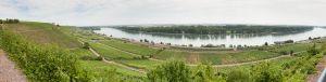 herr Wehrheims wijngaangaarden aan de Rijn!