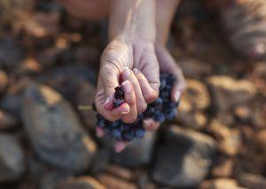 Wijnvrouwe van het jaar… Dama de Torre Bermeja