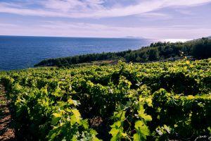 Uitzicht over de wijnvelden op het eiland Hvar!