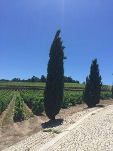 Uitzicht over de wijnvelden!