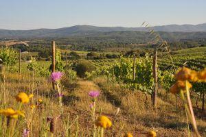 De wijnvelden van Quinta dos Currais
