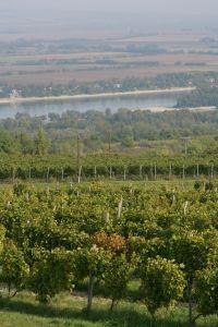 Uitzicht over dew wijngaarden van Hilltop!