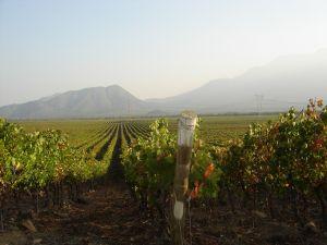 Uitzicht over de wijnvelden in de Cachapoal Valley!