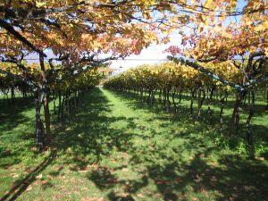 Wijngaarden van Spagnolli