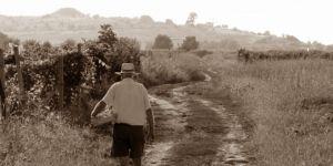 bulgaarse-wijngebieden - De Tracische laagvlakte