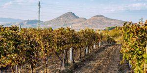 bulgaarse-wijngebieden - De Struma Vallei