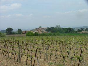 wijngaard provenquiere lente