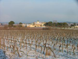 wijngaard provenquiere winter