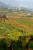 Uitzicht over de wijngaarden van Spagnolli