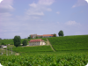 Wijnhuis Starmina