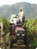 De net geplukte druiven onderweg naar de wijnmaker!